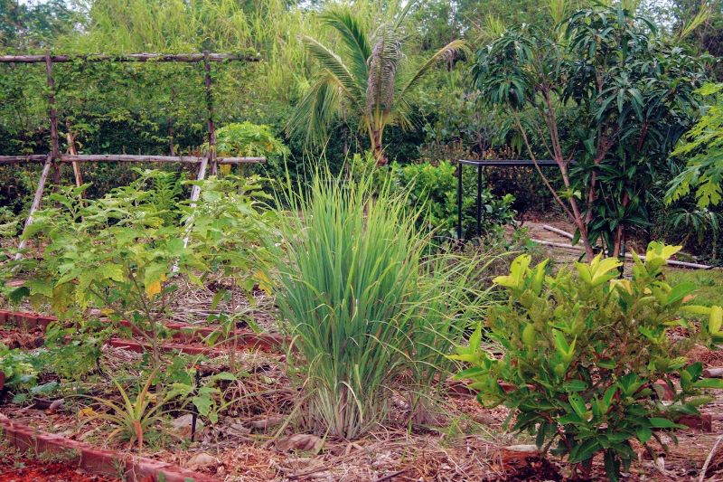 best fruit trees for warm climates