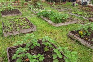 square foot garden beds without grid
